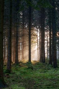 Winter Sunbeams von David Tinsley