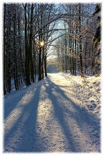 Winterwald by mario-s