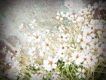 Frühlingsblüten by Ute Bauduin