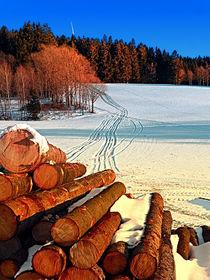 Holzstämme im Winter Wunderland | Landschaftsfotografie by Patrick Jobst