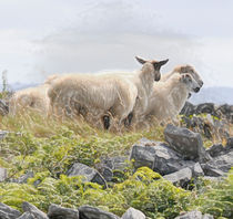 Ewe Like this by Dave  Byrne
