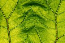 Green 1018 von Mario Fichtner
