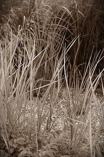Gräser von Ute Bauduin