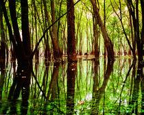 Afton Bayou 1 by Dan Dorland