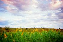Open Prairie by Dan Dorland