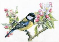Kohlmeise und Apfelblüte by Nicole Zeug