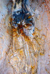 Bark King by crismanart
