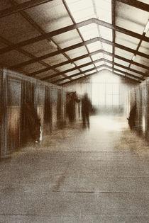 Vom Licht gestreichelt by Bastian  Kienitz