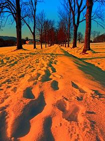 Allee im Winter zur Abenddämmerung | Landschaftsfotografie by Patrick Jobst