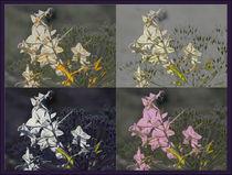 """Viererbild """"Samen und Blüten"""" von lisa-glueck"""