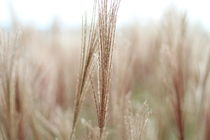 Das Korn im Herbst von andygrafie