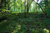 Sonne im Wald von gilidhor
