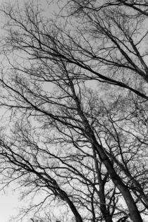 Bäume am Feld by gilidhor