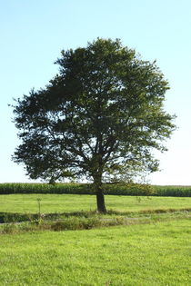 single tree by hadot