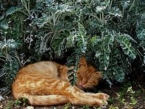 Cat Sleeping In A Garden   by Rick Todaro