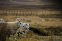 ein schottischer Abend by lilithdavinci
