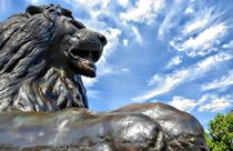Trafalgar Square Lion. by Peter Rivron