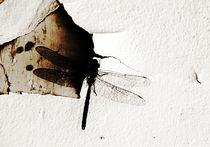 dragonfly von Baptiste Riethmann