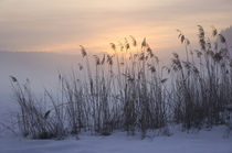 'Winterabend' von Thomas Matzl