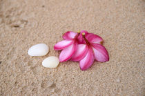 Flowers and Cockleshells on Sand by cinema4design