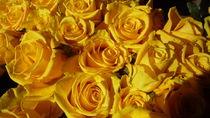 yellowsunshine by tombom