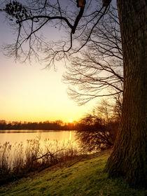 Blick auf den Berger See von Daniel Heine