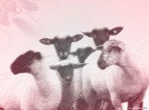 Schafe-2015-deernvundiek