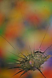flower shots... 12 von loewenherz-artwork