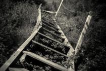Overgrown stairs von David Hare