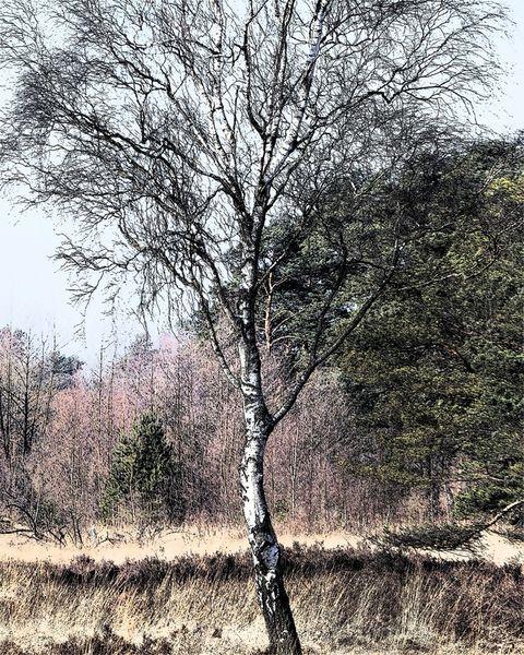 Schnaakenmoor
