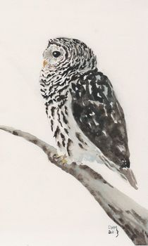 Barred Owl Watching von Sandy McDermott