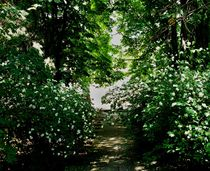 100-3648-jasmine-path