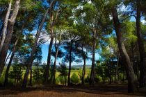 French Woodland von David Hare
