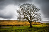Single tree in stormy weather by David Hare