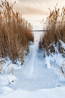 Winter am Bodden von Rico Ködder