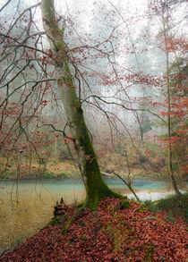 'Die Nebelbuche' von Thomas Matzl