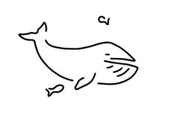 Wal-blauwal-meer
