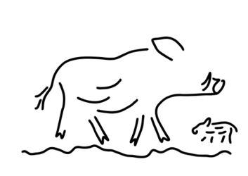 Wildschwein-frischling-keiler-wildsau