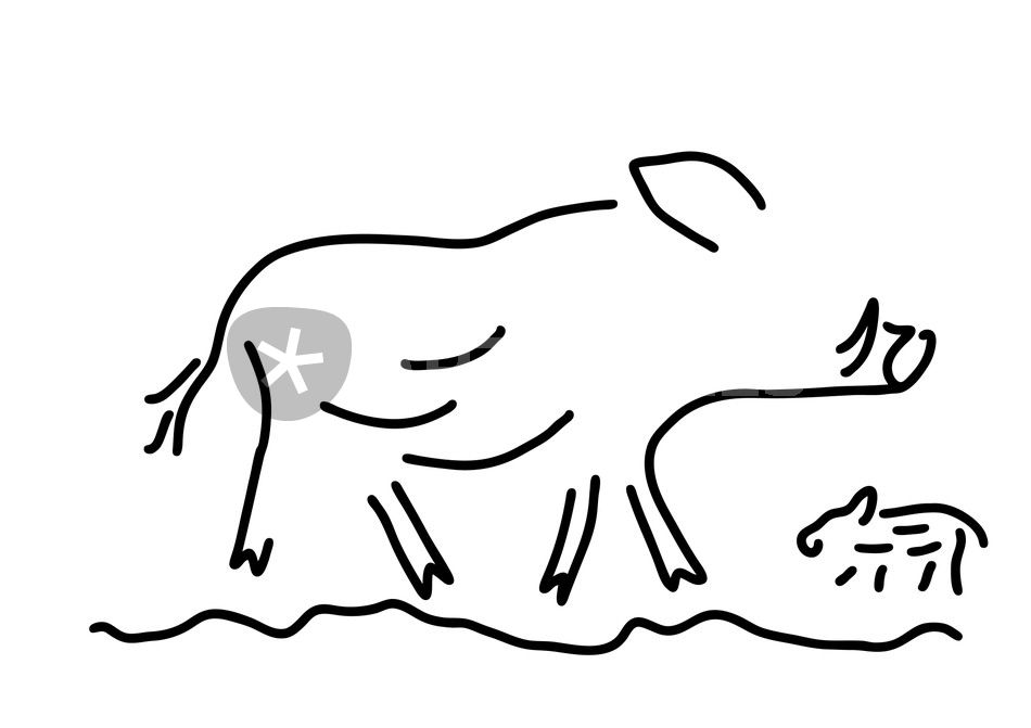 Wildschwein Frischling Keiler Wildsau Grafik Illustration Als