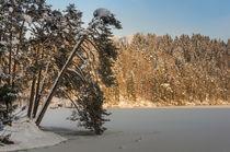frozen lake with pine tree von Thomas Matzl
