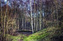 Woodland Spaces von Vicki Field