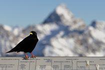 Hoher Vogel Hochvogel von fostern