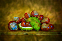 Conker Season by David Hare