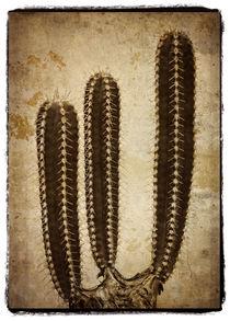 Cactus von Cesar Palomino
