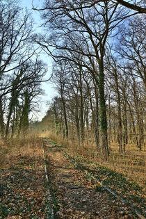 Schienen im Wald by Falko Follert