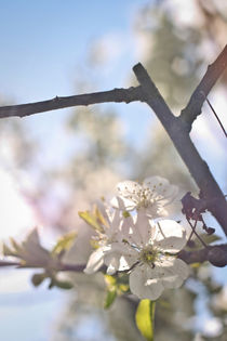 Spring light von Alexandra Popescu