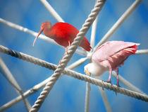 Two Birds by eivinak