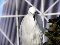 Lonely Bird by eivinak
