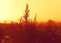 Golden Hour by eivinak