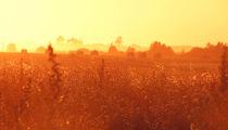 Golden Field by eivinak